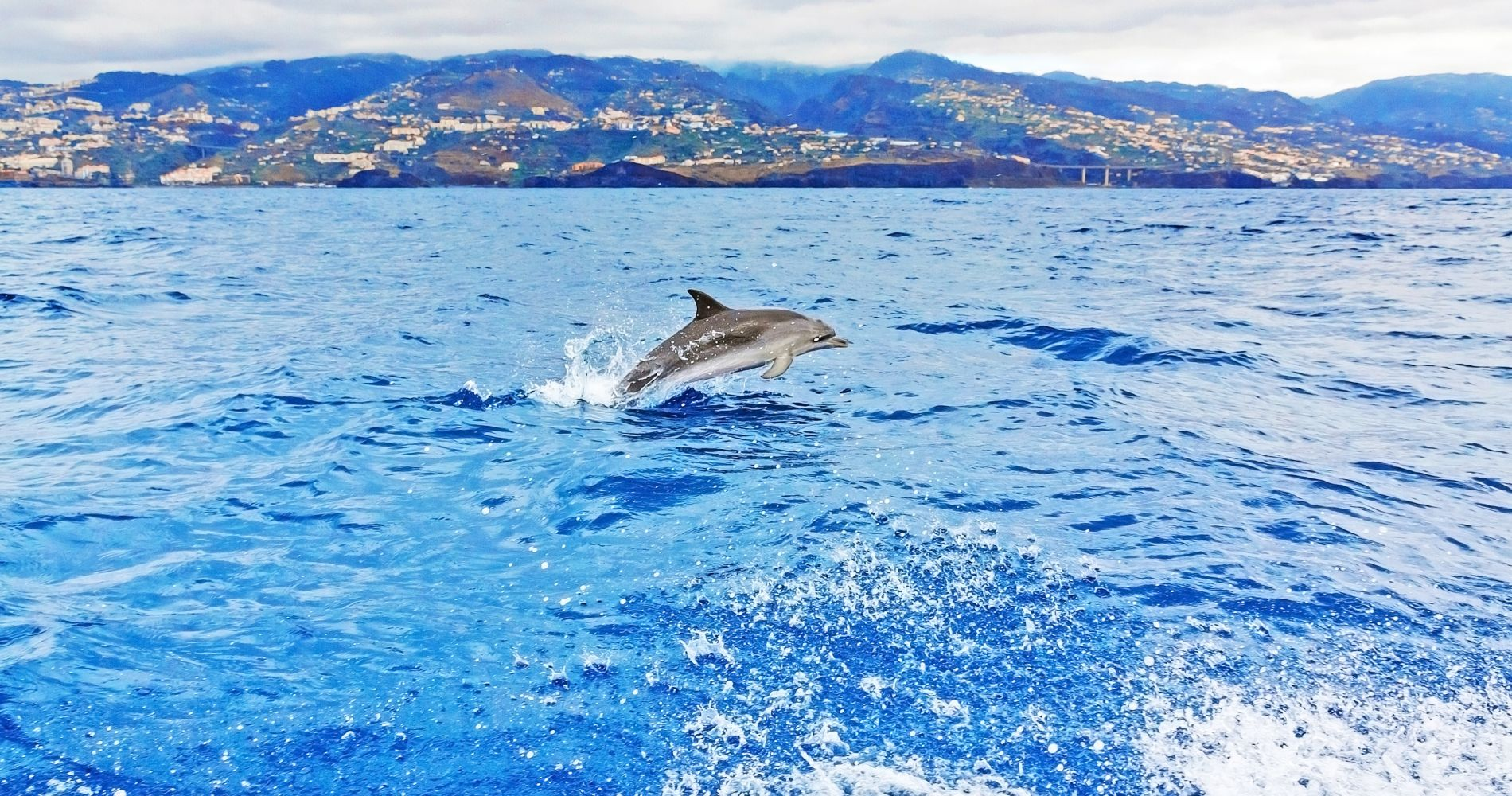Bird, Dolphin, Whale Watching Madeira Experience Gifts