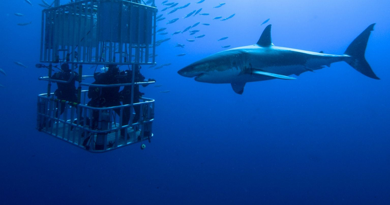 Thrilling Shark Diving with Great White Sharks South Africa Tinggly Experience Gifts