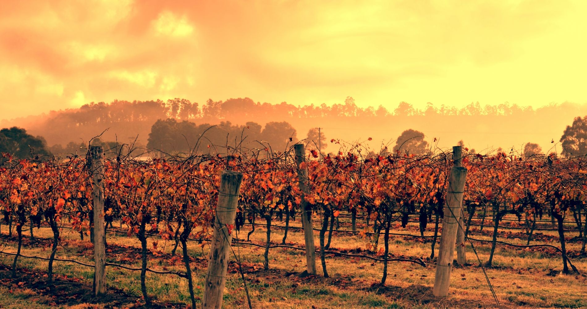 The Iconic Hunter Valley Wine Tasting for Two