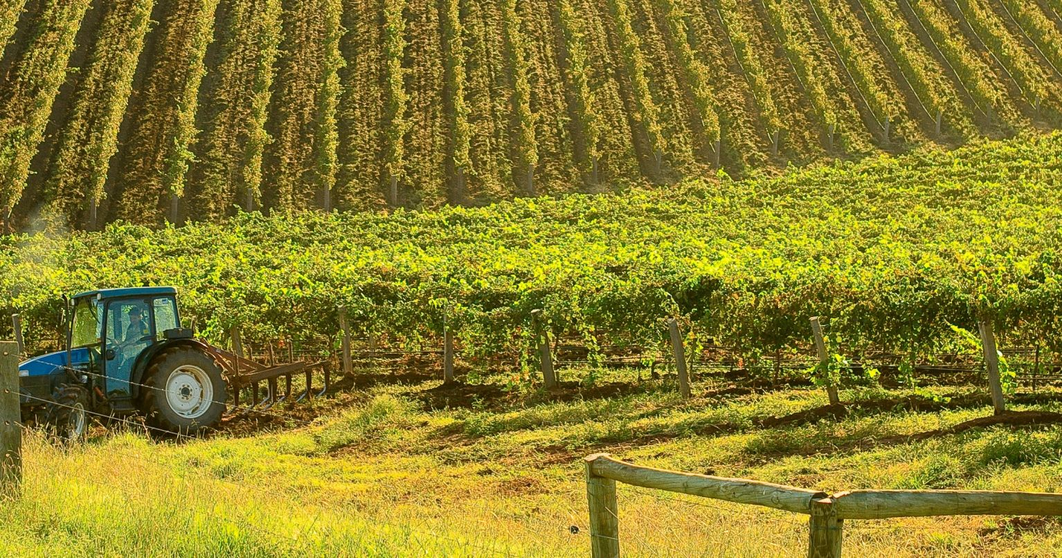 Iconic Hunter Valley Wine Tinggly Experience Gifts