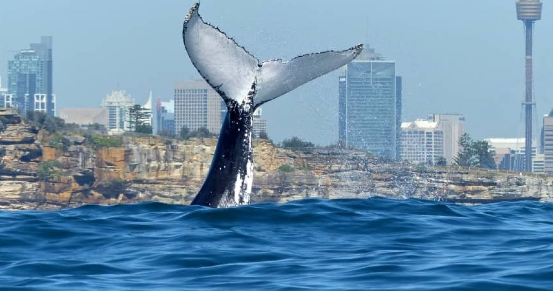 Whale Watching and Sydney Harbour Lunch Cruise for Two
