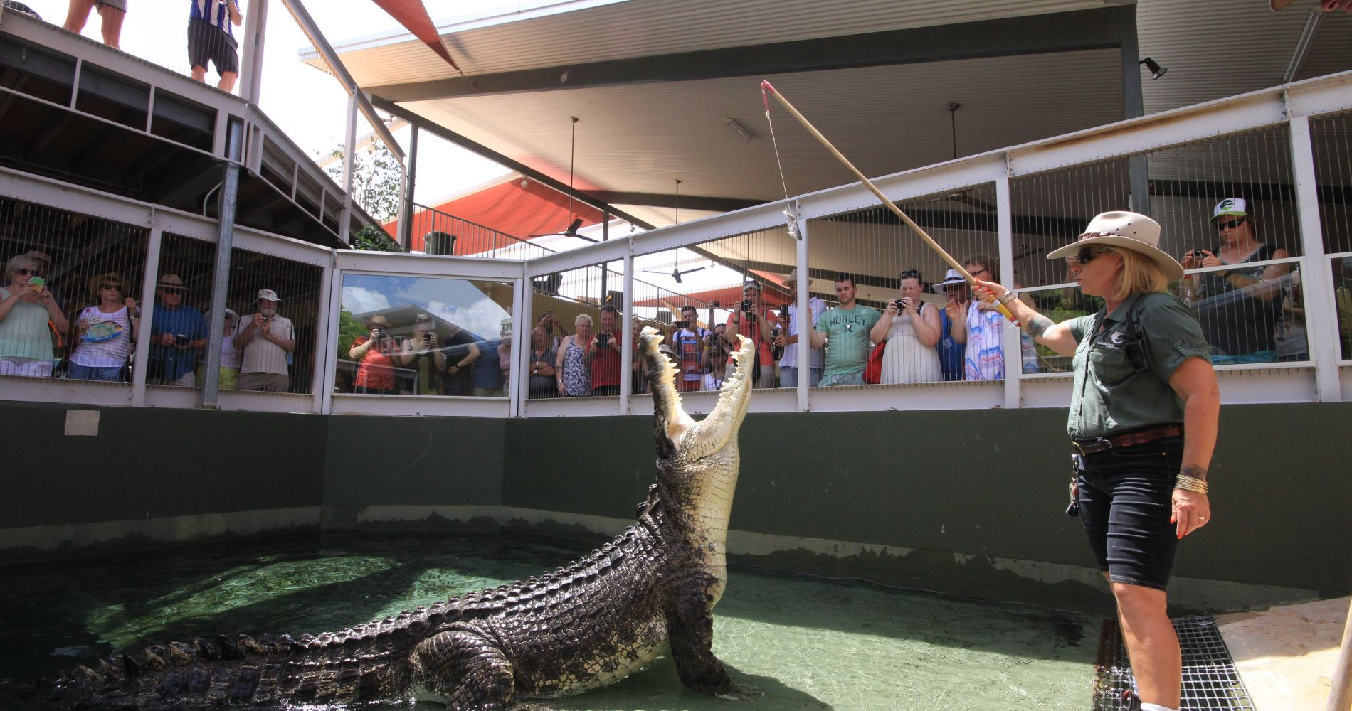 Big Croc VIP Feed Australia Tinggly Experience Gifts