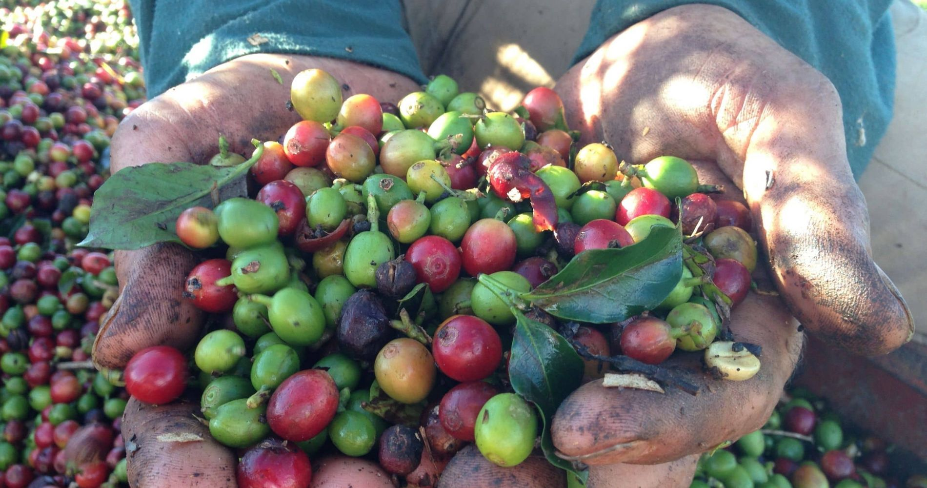 A Visit to Coffee Farm in Costa Rica For Two