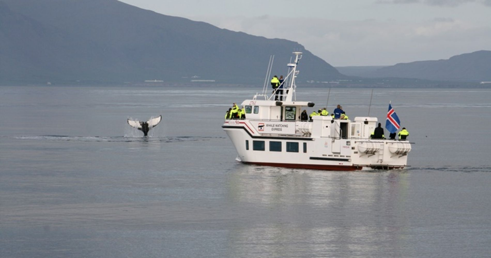 Arctic Whale Watching Iceland Tinggly Experience Gifts