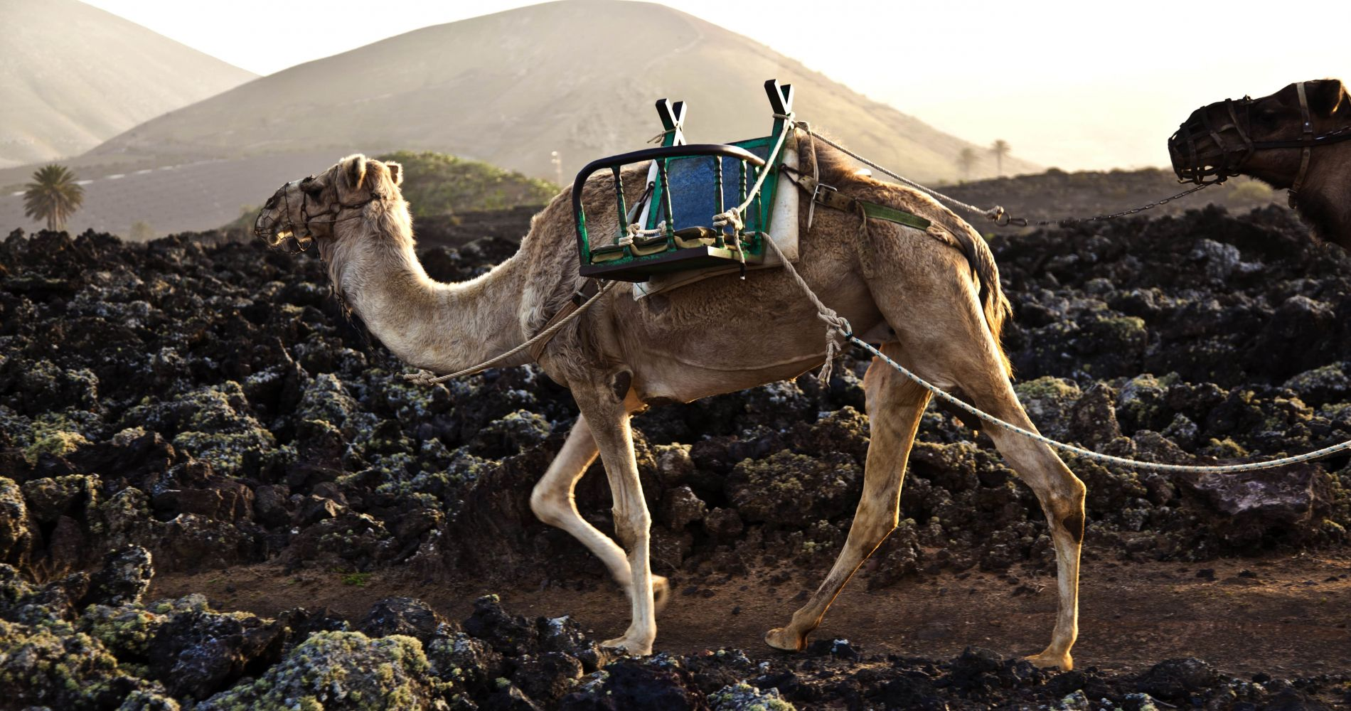 Full-Day Volcanoes and Caves Experience of Lanzarote