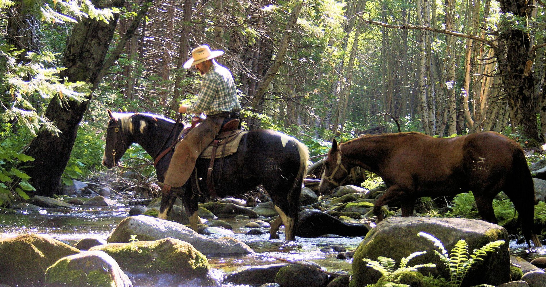Big Creek Horseback Ride California Tinggly Experience Gifts