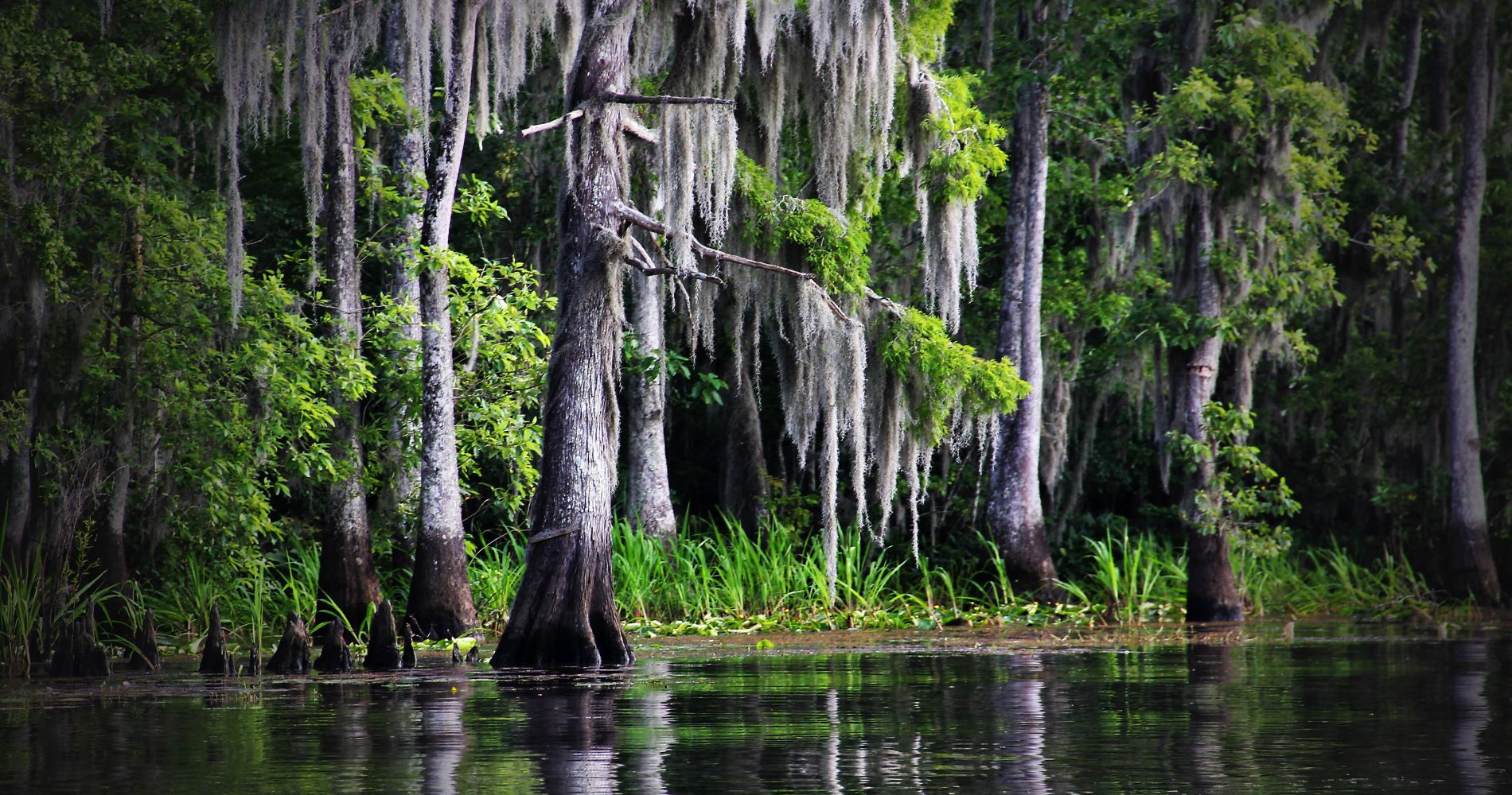 Swamp Tour in the Lands of Louisiana