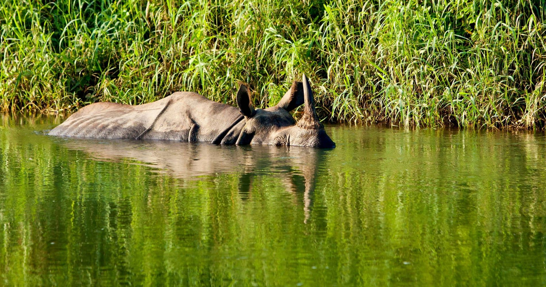 Two-days Chitwan Jungle Safari Experience in Nepal for Two