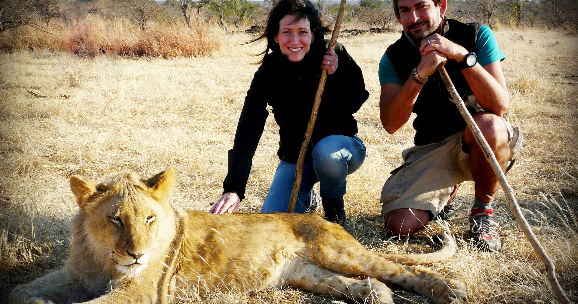 Walking with lions in Zimbabwe for Two