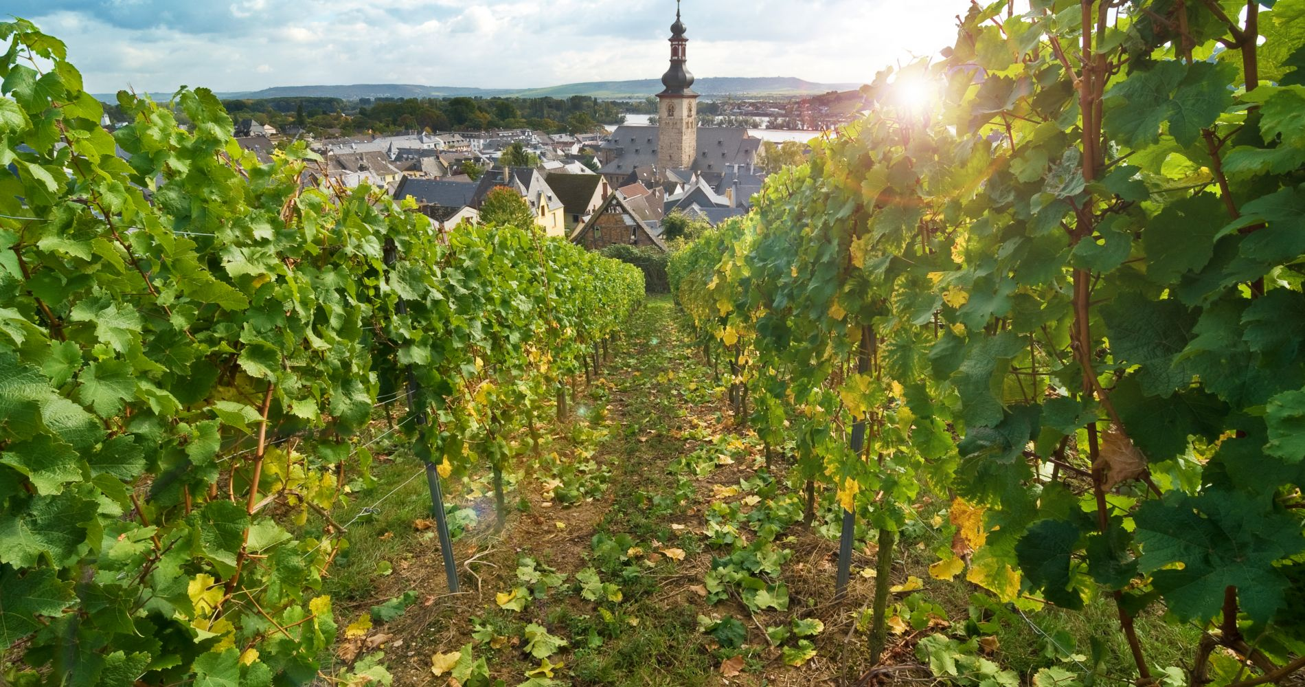 Day Trip down the Rhine Wine Tasting Tinggly Experience Gifts
