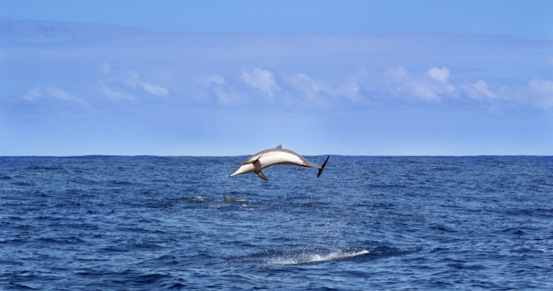 Swimming with Dolphins in New Zealand for Two