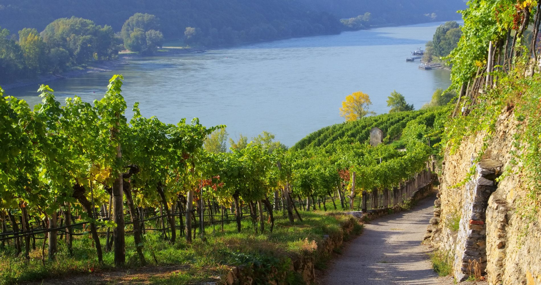 Winery Biking Tour Austria Tinggly Experience Gifts