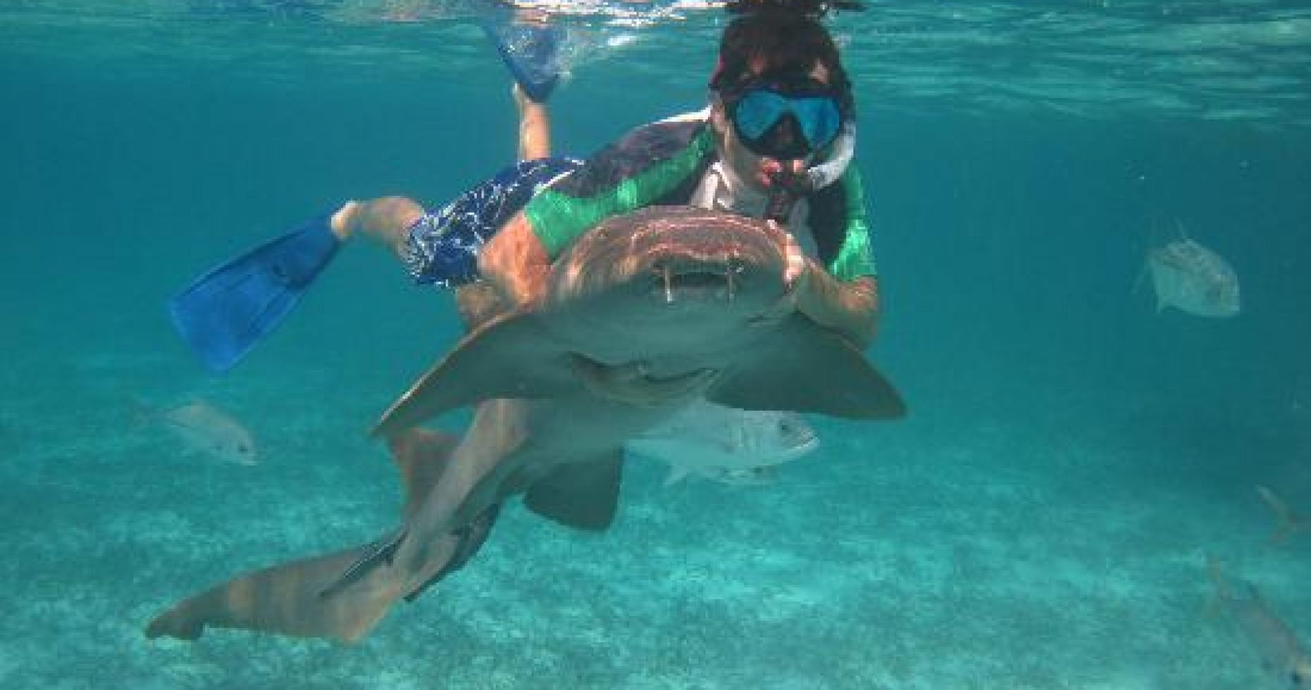 Swim with Real Sharks Eco-tour Indonesia Tinggly Experience Gifts
