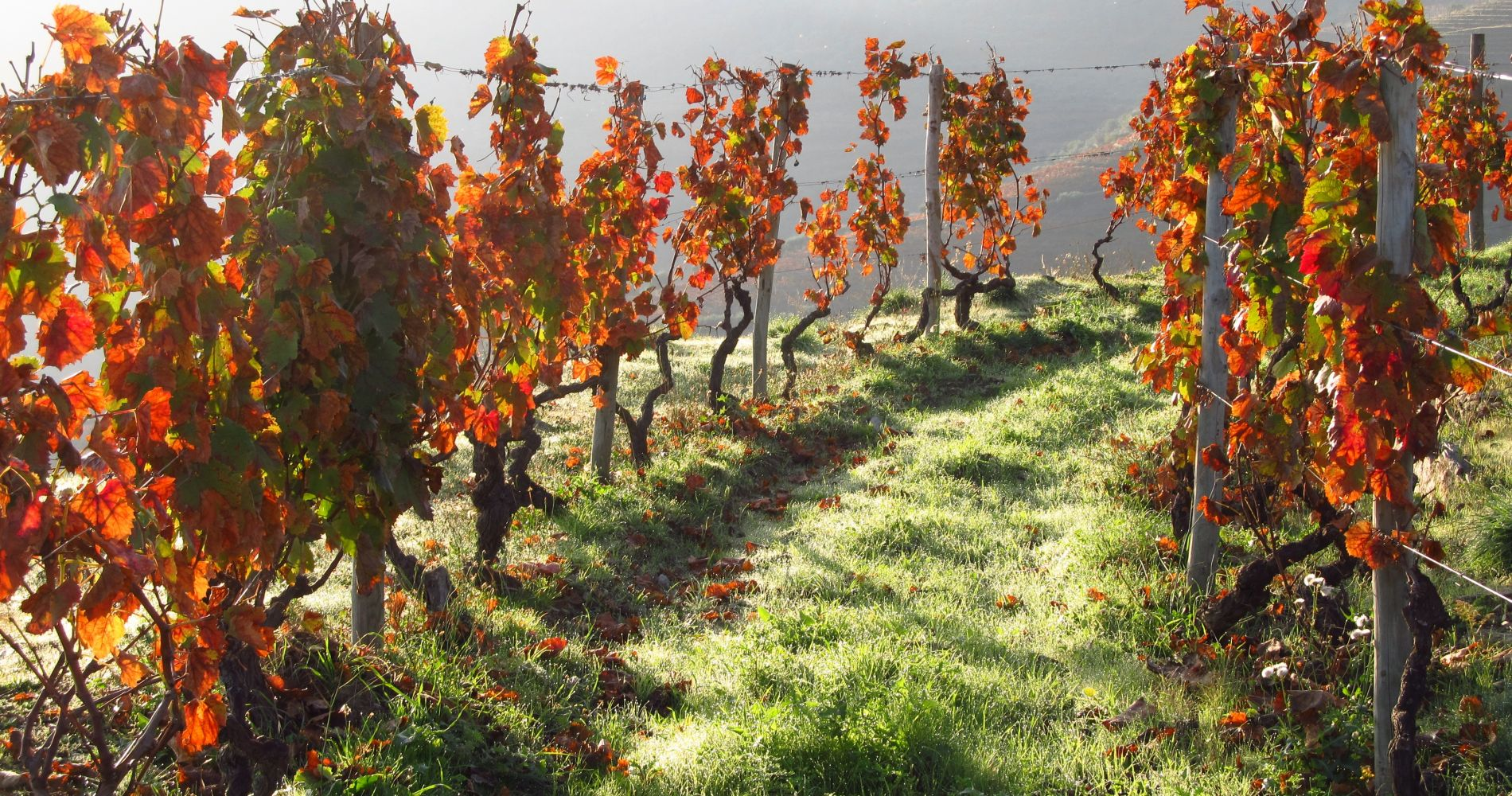 Douro Wine Experience in Portugal  Tinggly Experience Gifts
