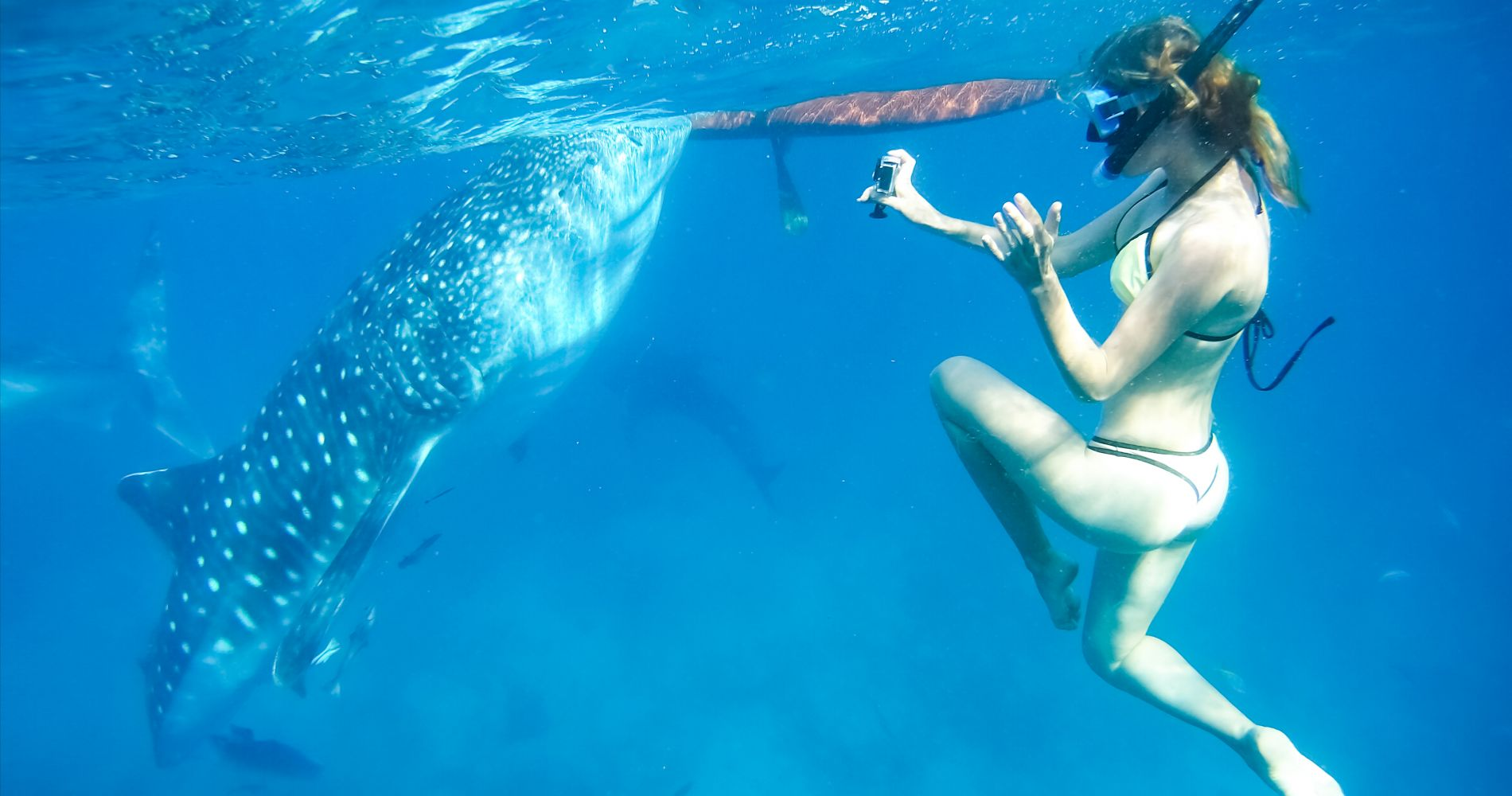 Swim with Real Sharks at Eco-tour for Two in Indonesia