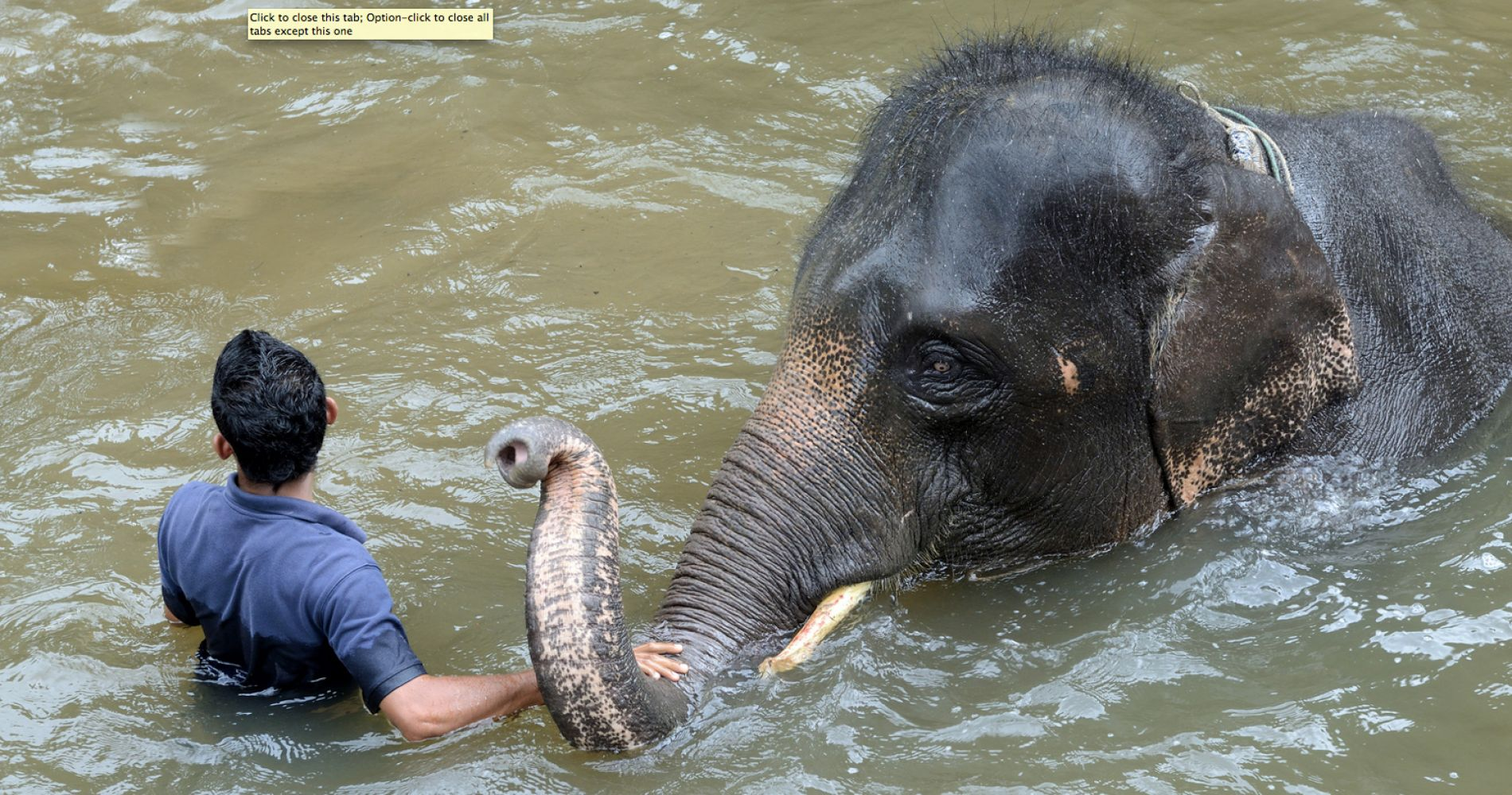 Swim with an Elephant Malaysia Tinggly Experience Gifts