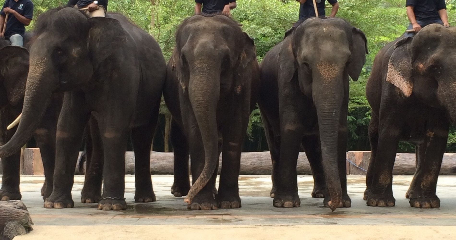 Spend a Day with Elephants in Malaysia