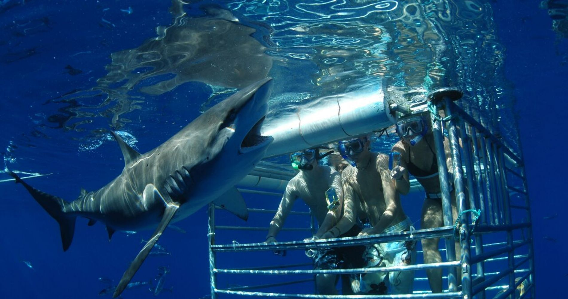 Extreme Hawaii Shark Encounter Tinggly Experience Gifts