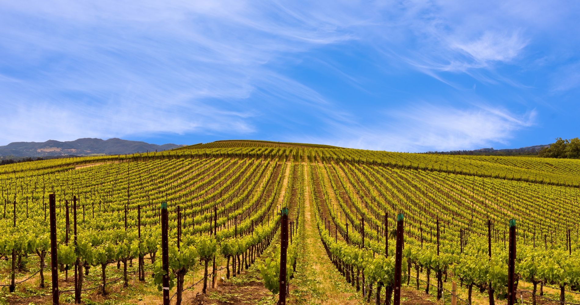 Wine Tasting in Napa Valley for Two