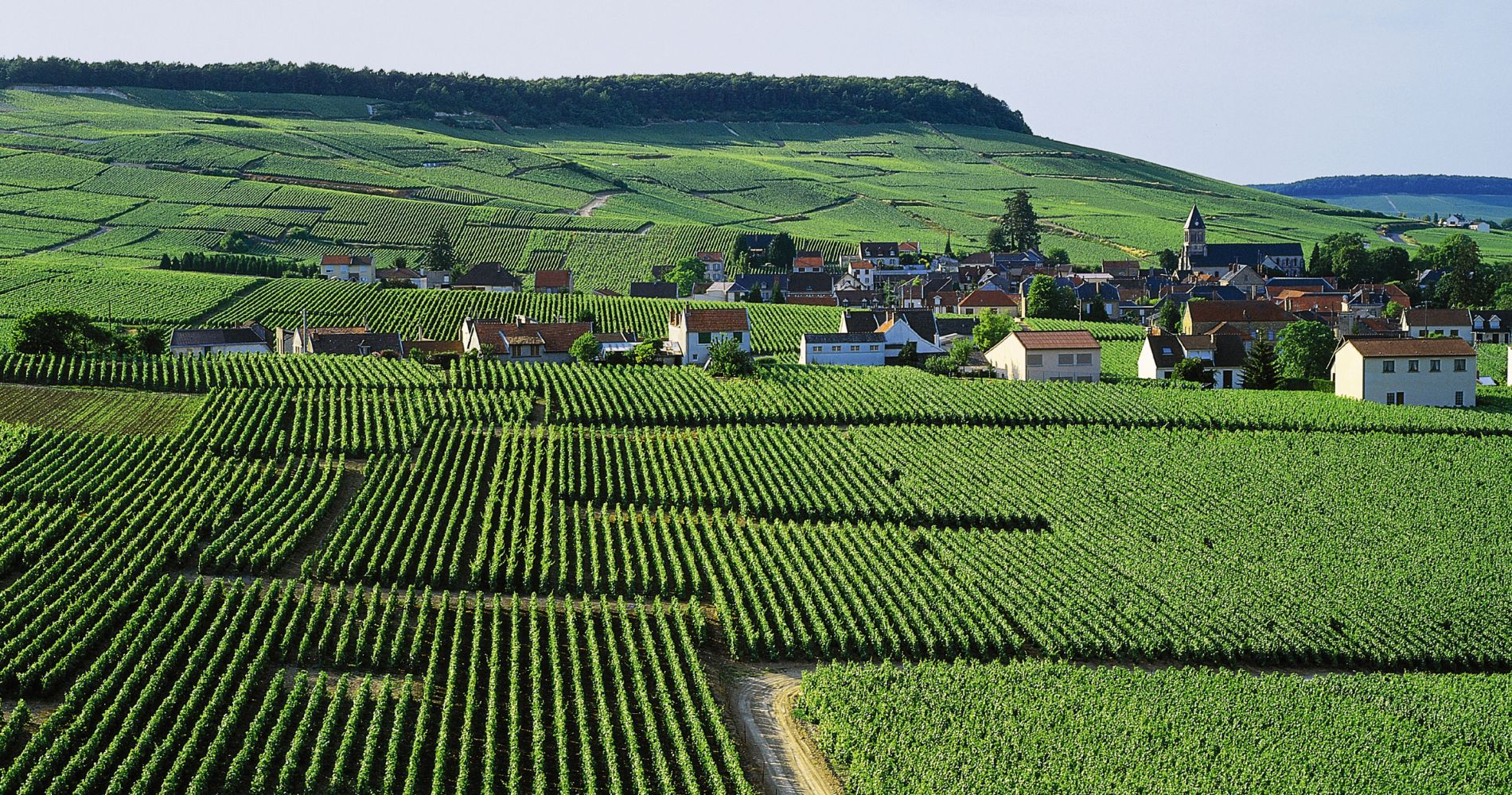 Wine Tasting Experience Champagne Region, France Tinggly Gifts