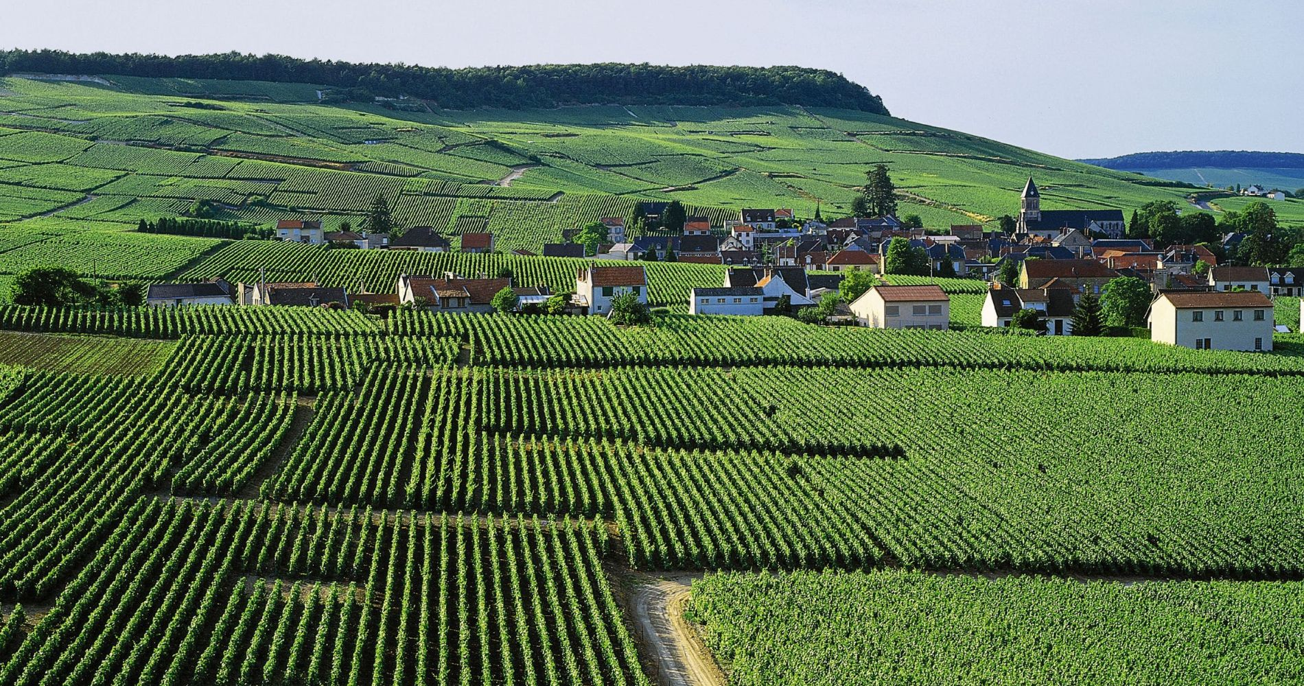 Wine Tasting Experience in Champagne Region, France
