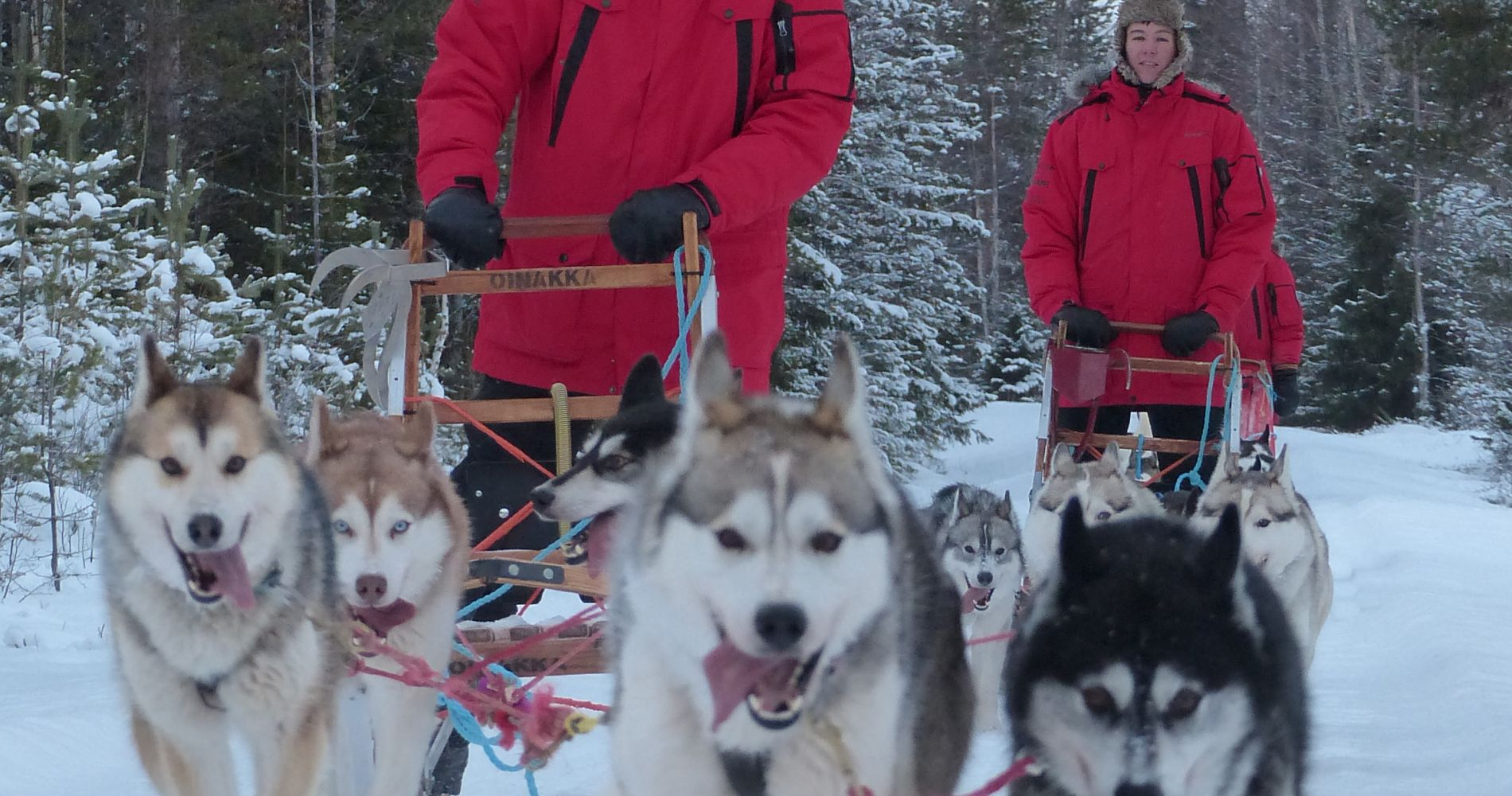 Dog Sledding Sweden Tinggly Experience Gifts