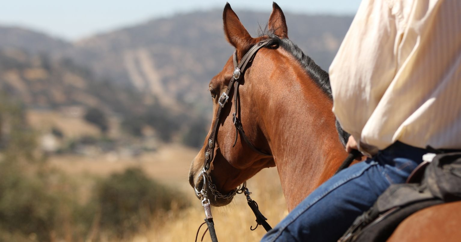 Horseback Ride Under the Hollywood Sign Los Angeles Tinggly Experience Gift