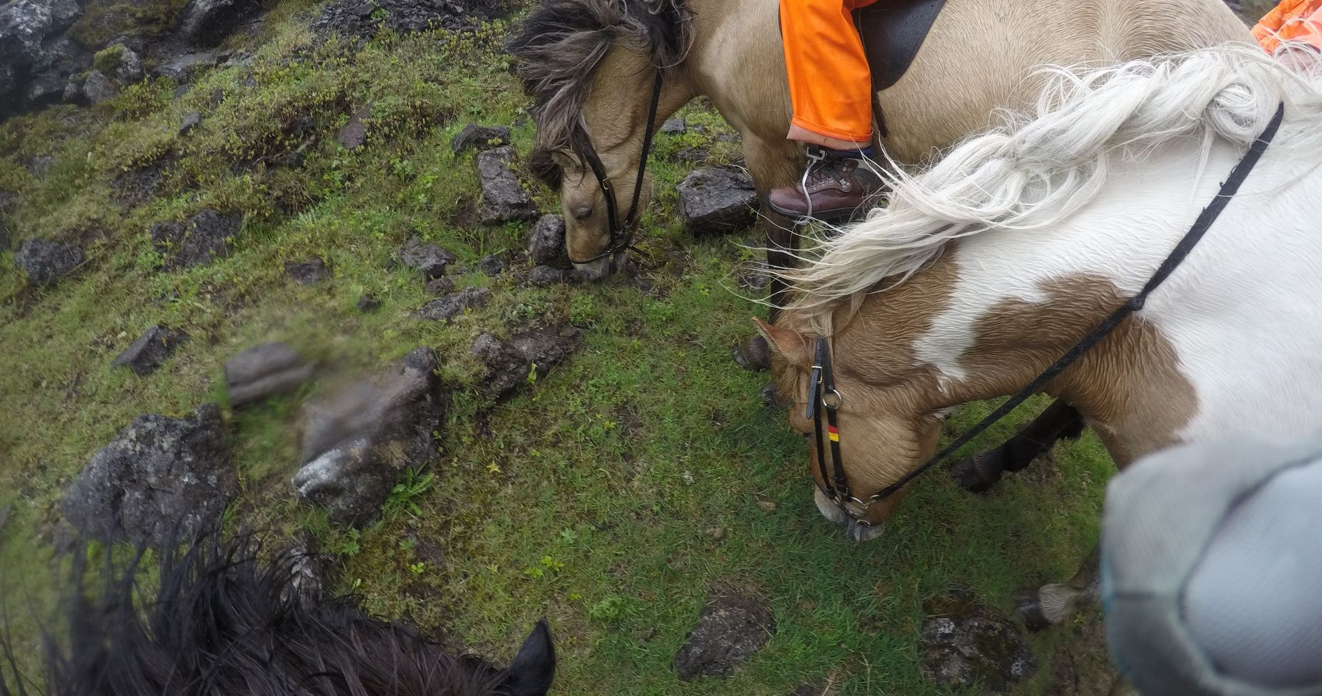 Lava Horse Riding Tour in Iceland