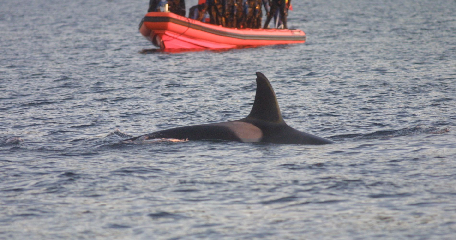 Whale Safari Norway Tinggly Experience Gift