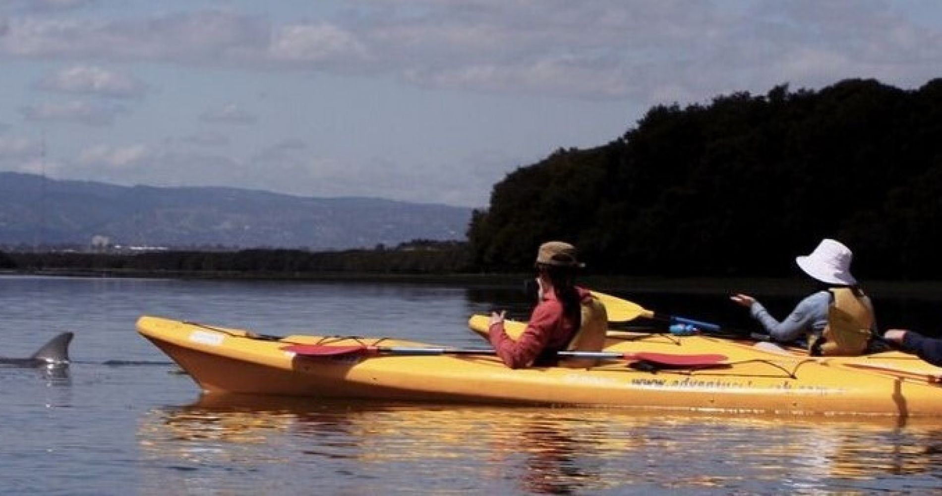 Dolphin Kayaking Adventure Experience Gifts