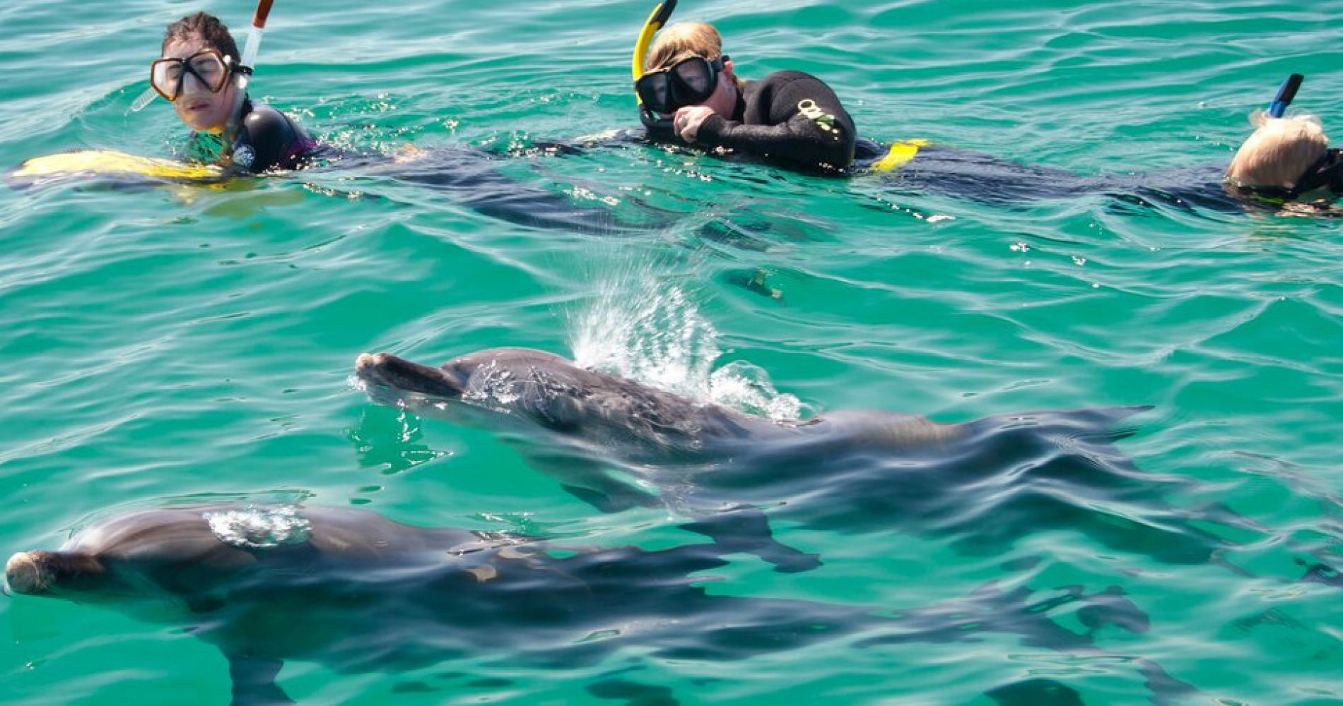 Swim with dolphins experience gifts