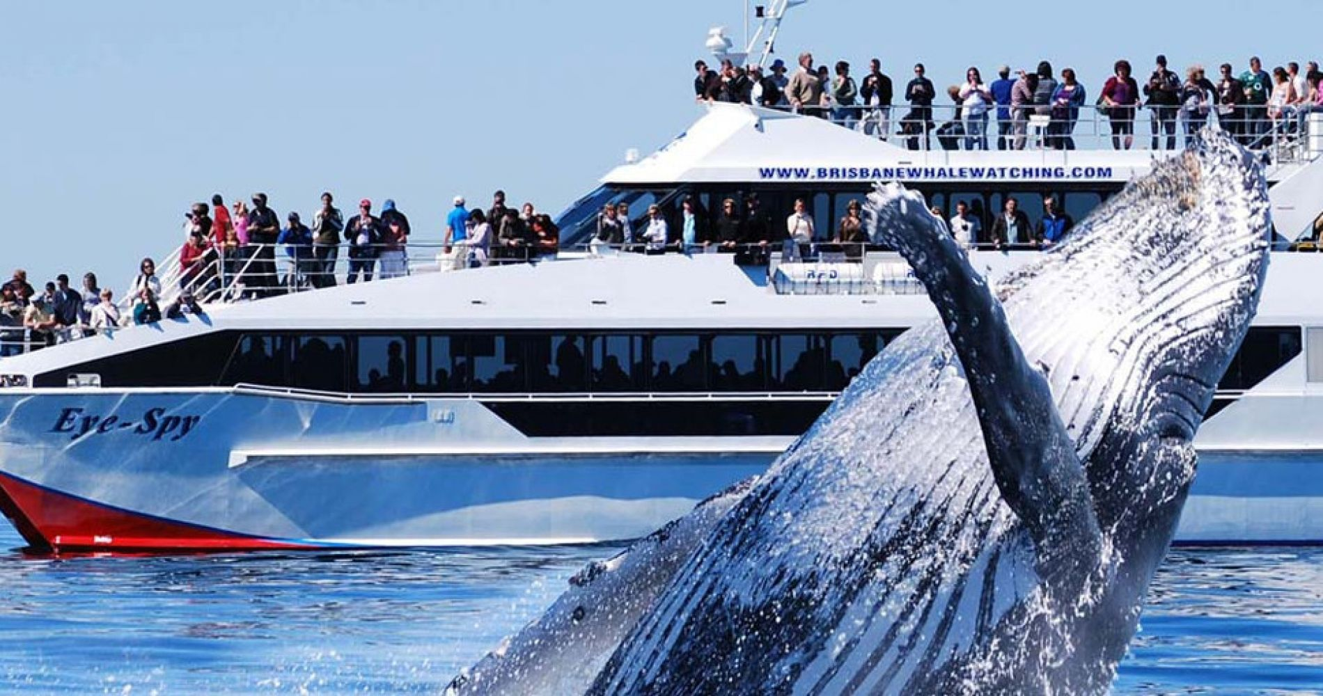Whale Watching Brisbane Experience Gifts