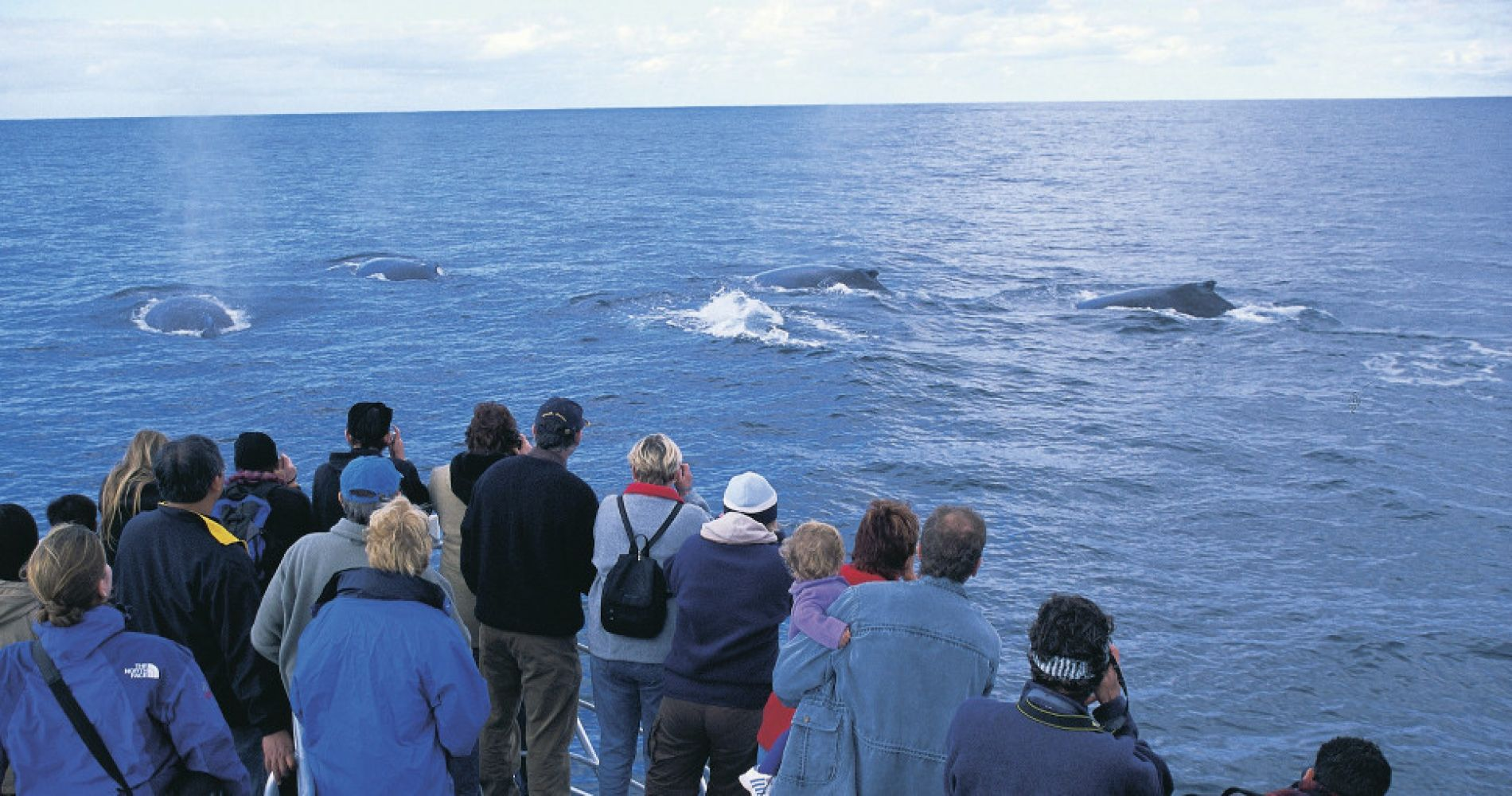 Whale-Watching Cruise Australia Experience Gifts