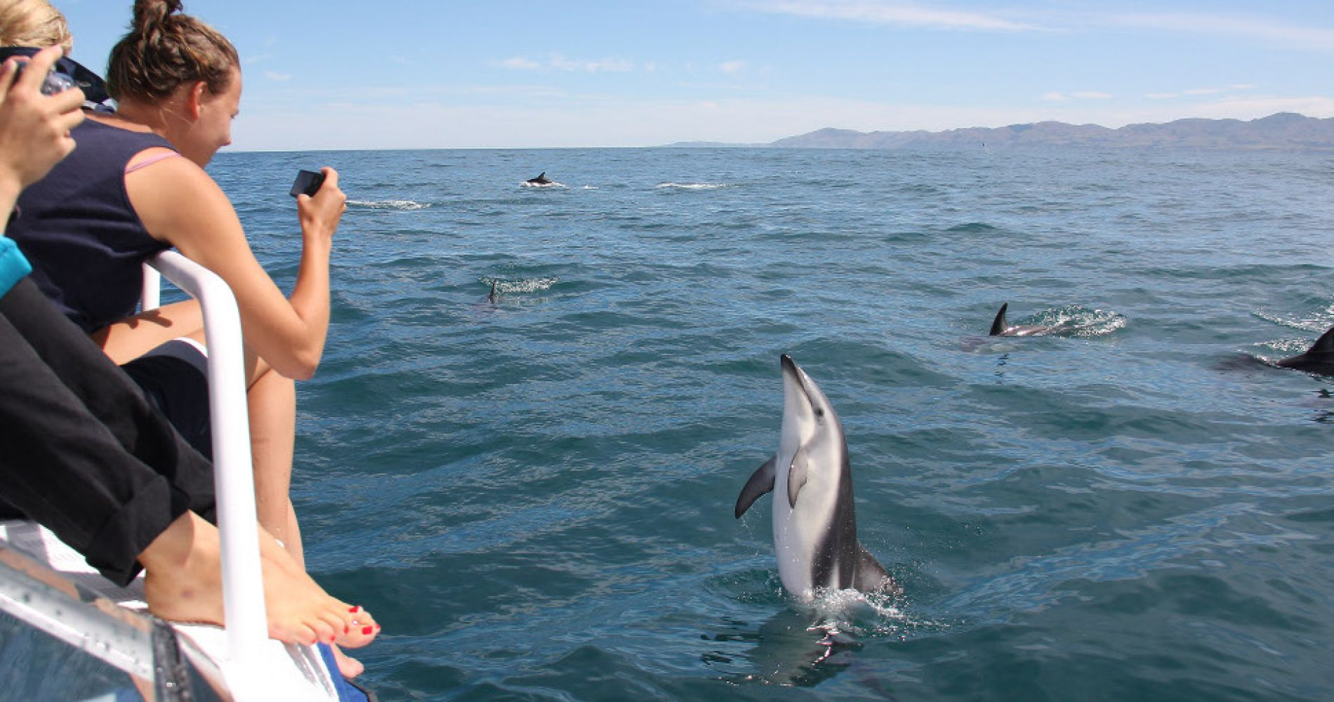 Swimming with Dolphins Akaroa Experience Gift
