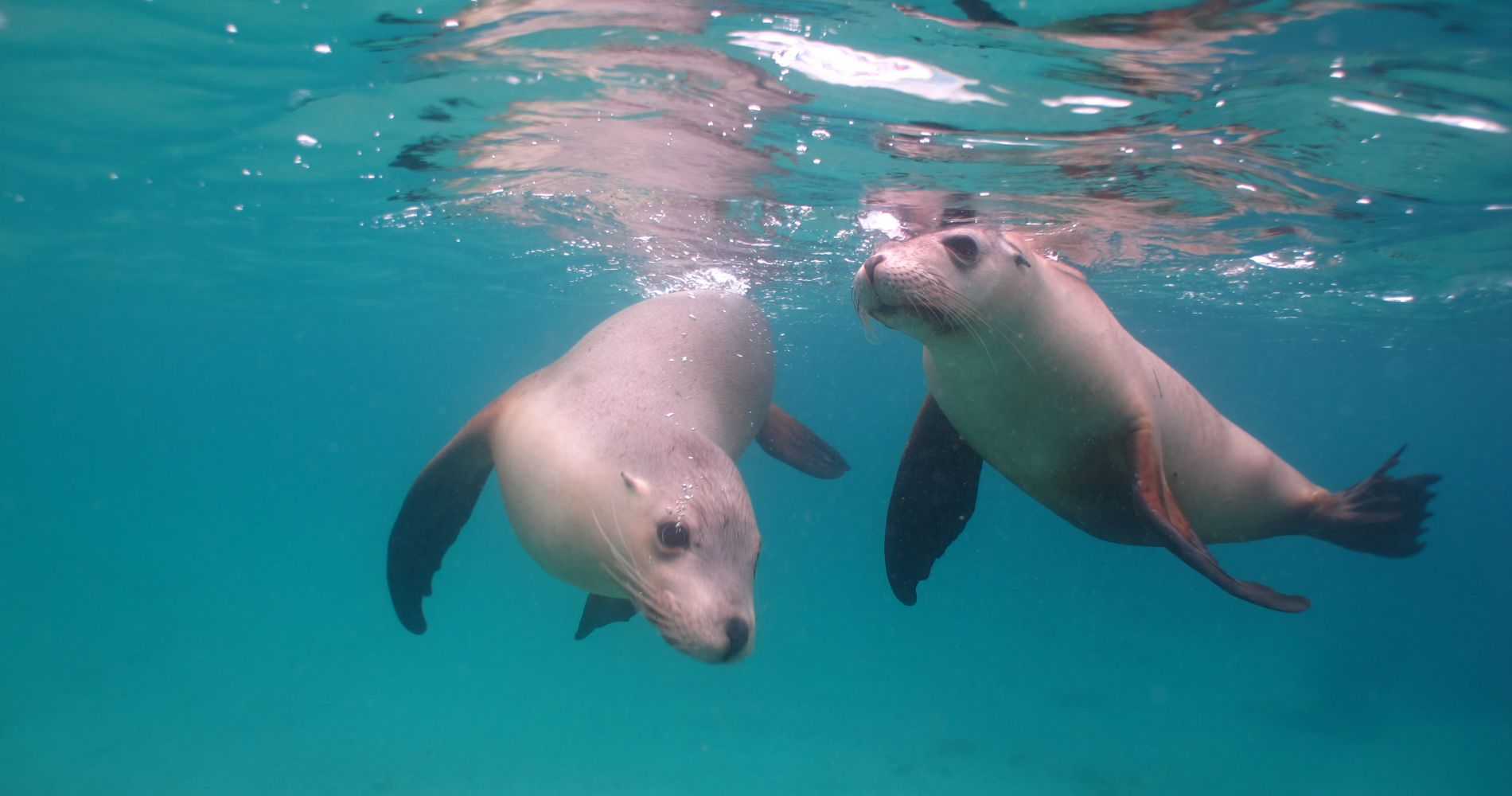 Dolphin Seal Swim Experience Gift