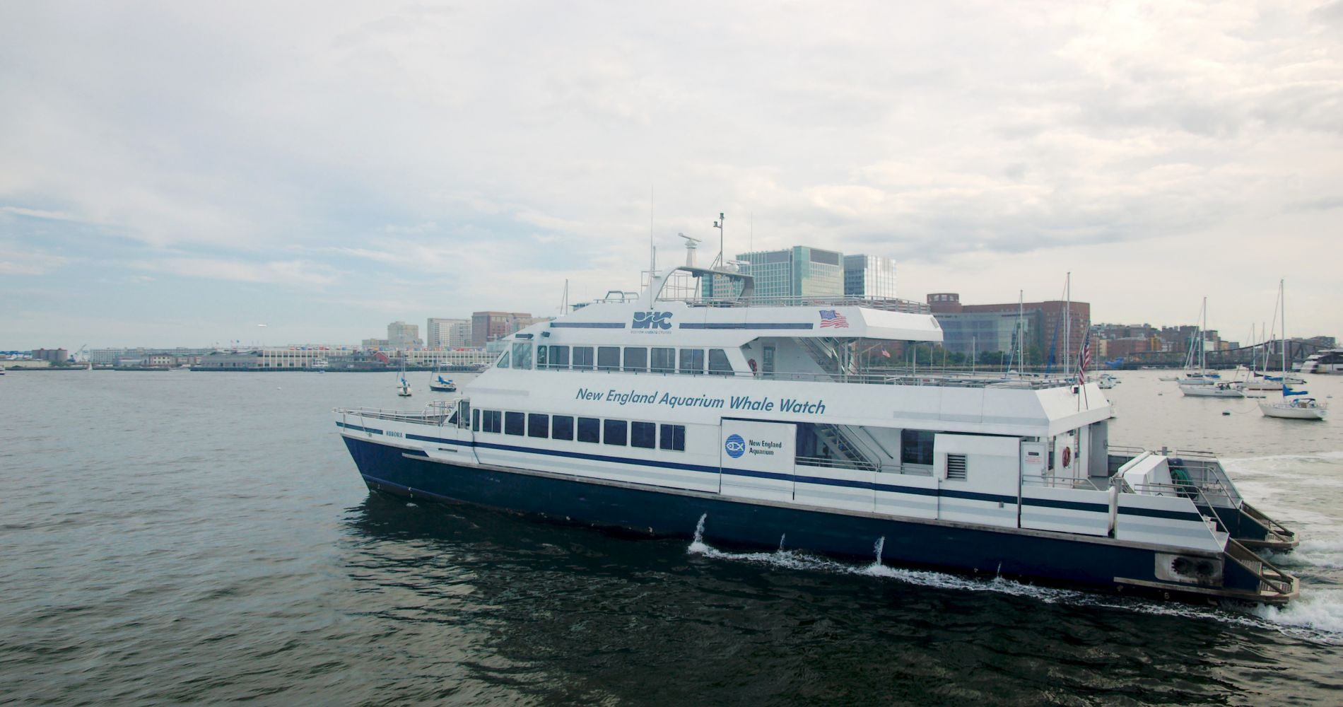 Whale Watching Cruise from Boston Experience Gift