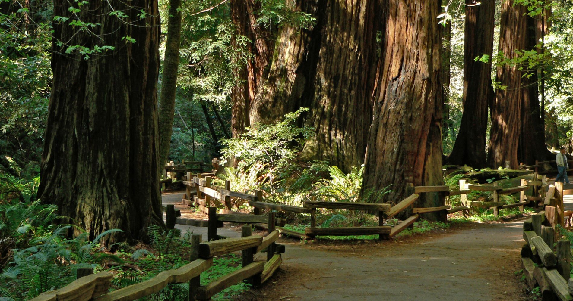 Muir Woods & Wine Country Tour from San Francisco