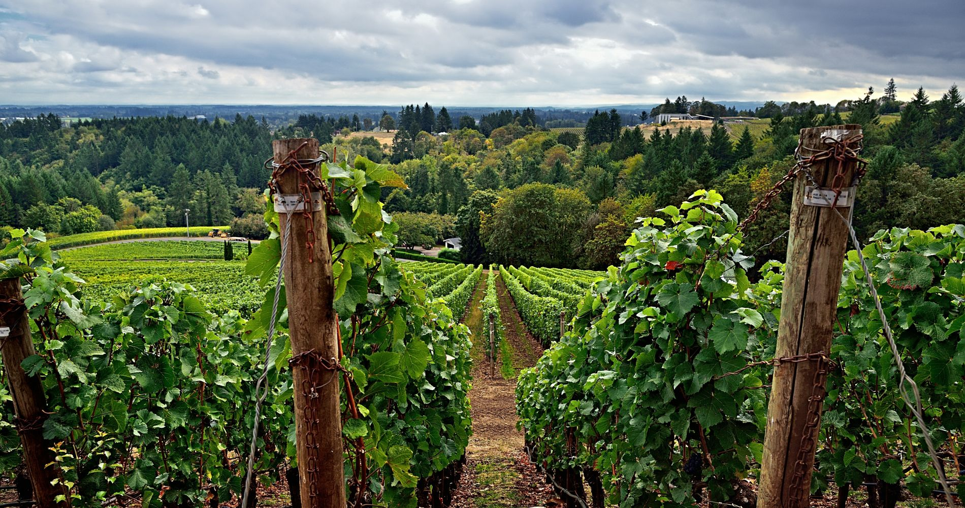 Willamette Valley Wine Tour with Tastings in Oregon for Two