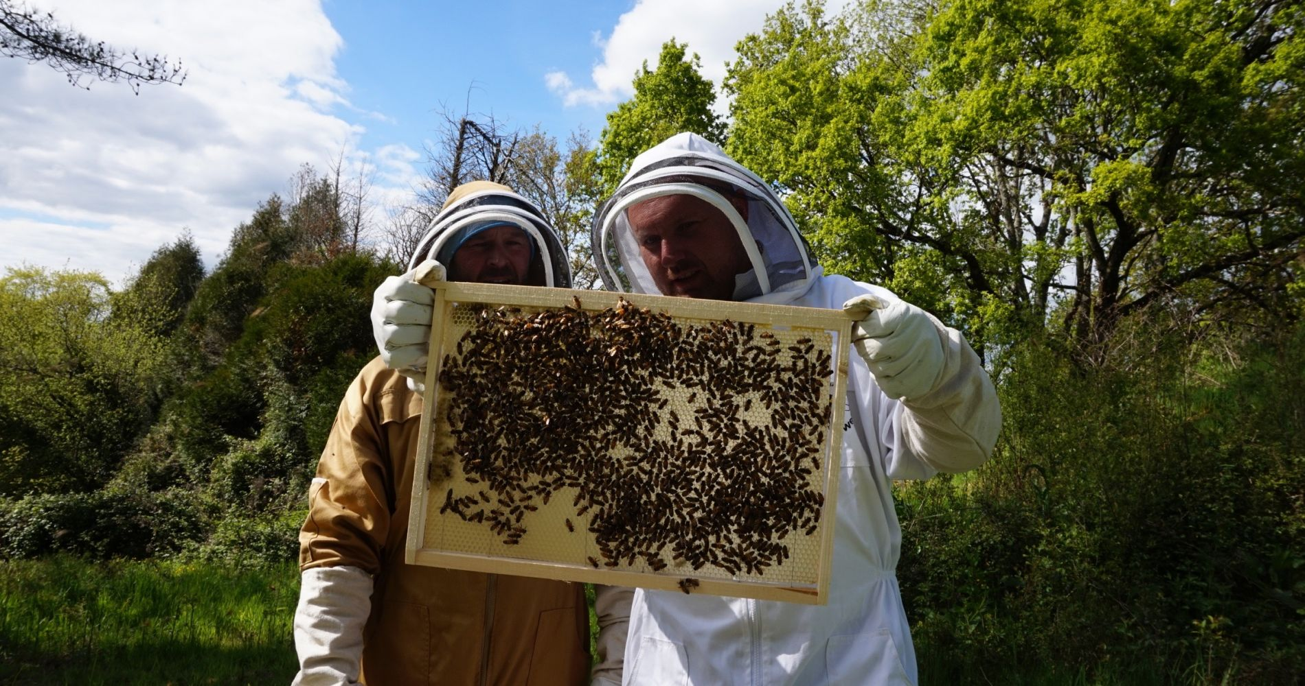 Beekeeping Taster Experience for 2 in Sunny France