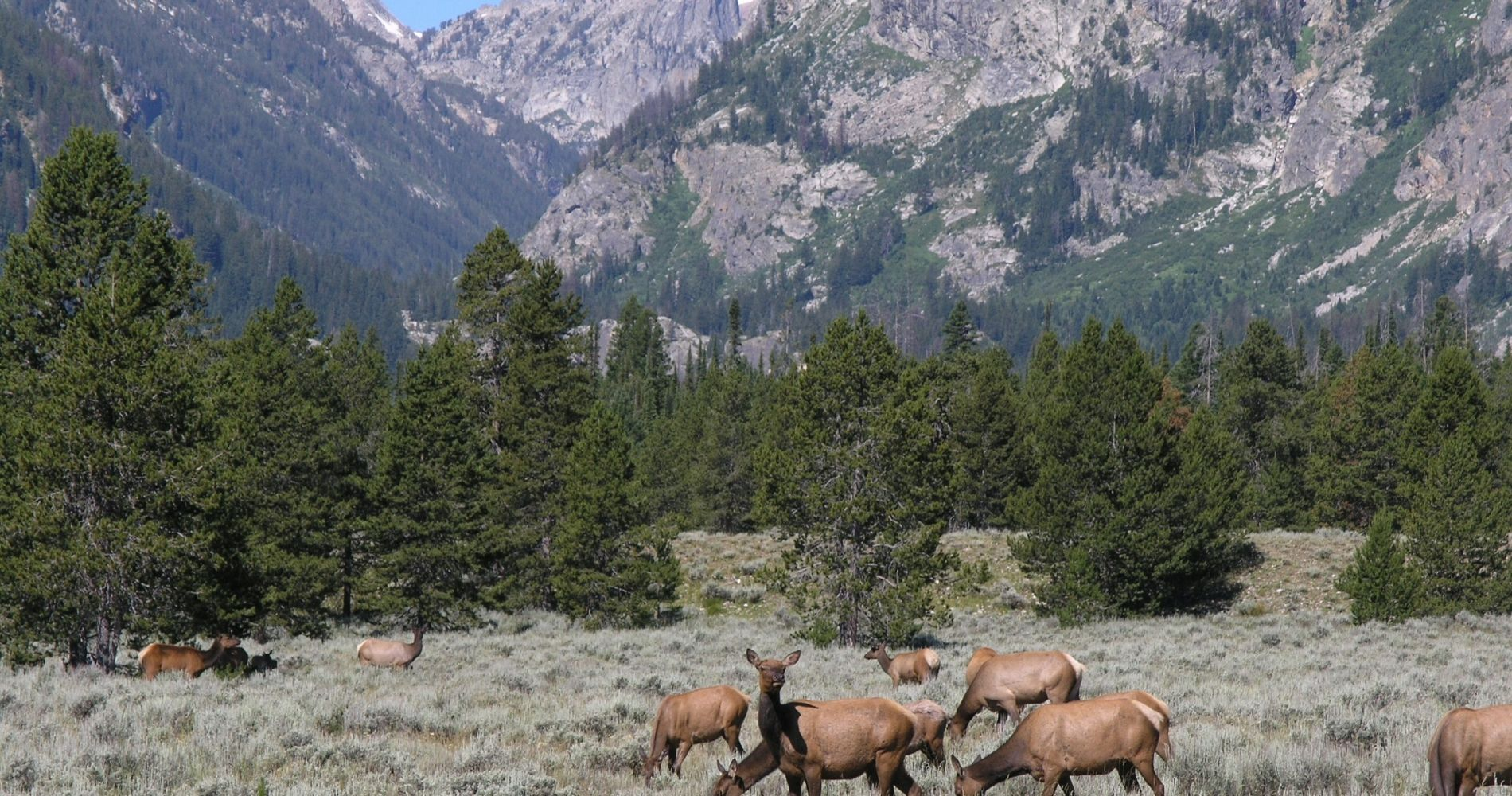 Morning Wildlife Safari Adventure in Wyoming