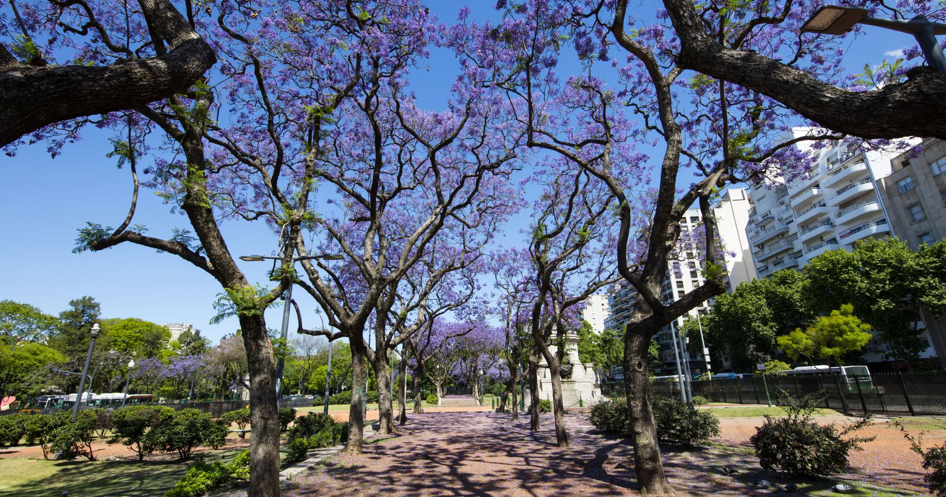 Best of Buenos Aires City Walking Tour