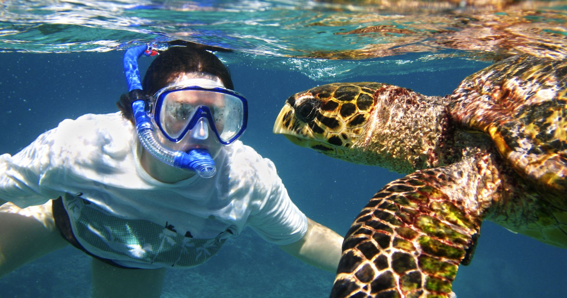 Turtles & Shipwrecks Snorkeling Tour in Barbados for Two