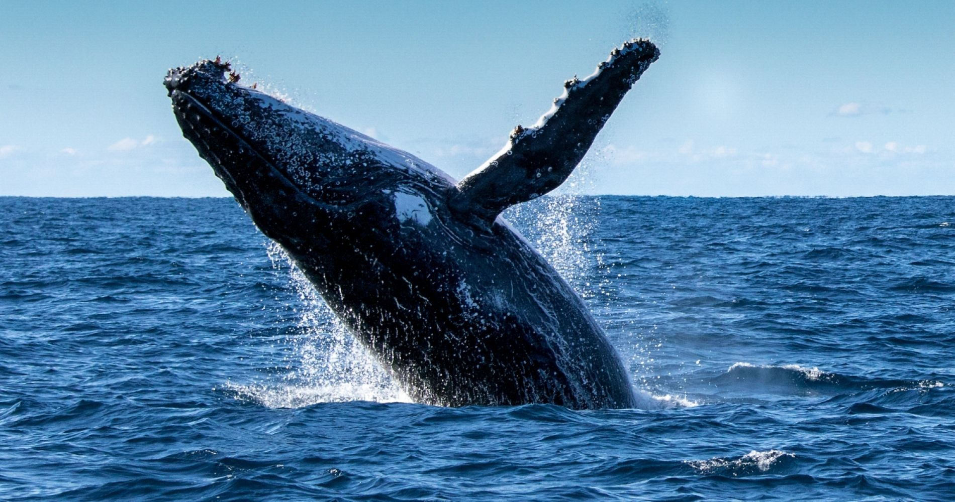 Whales & Saguenay Fjord Tour from Tadoussac