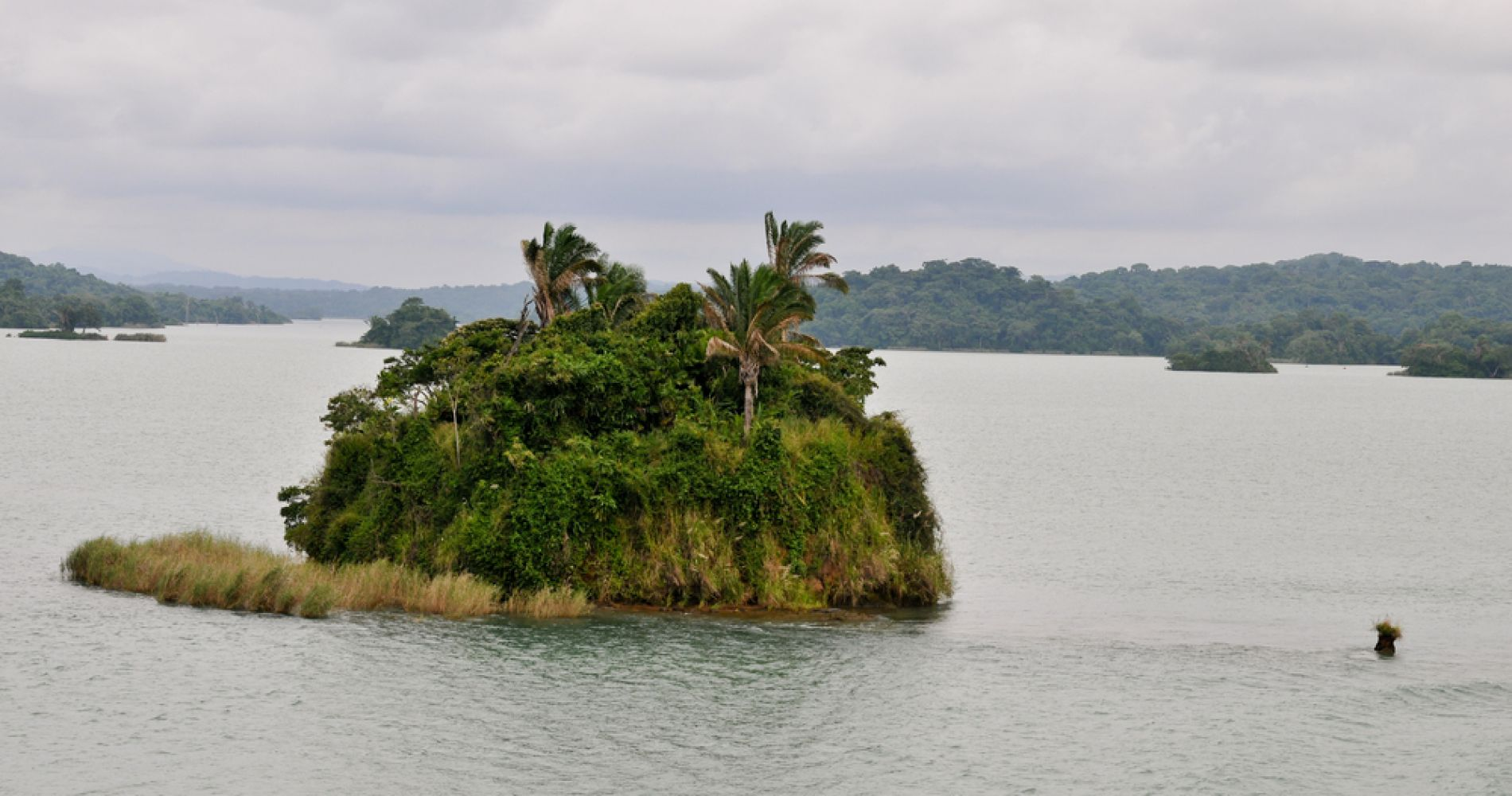 Jungle and Gatun Safari Experience on the Panama Canal