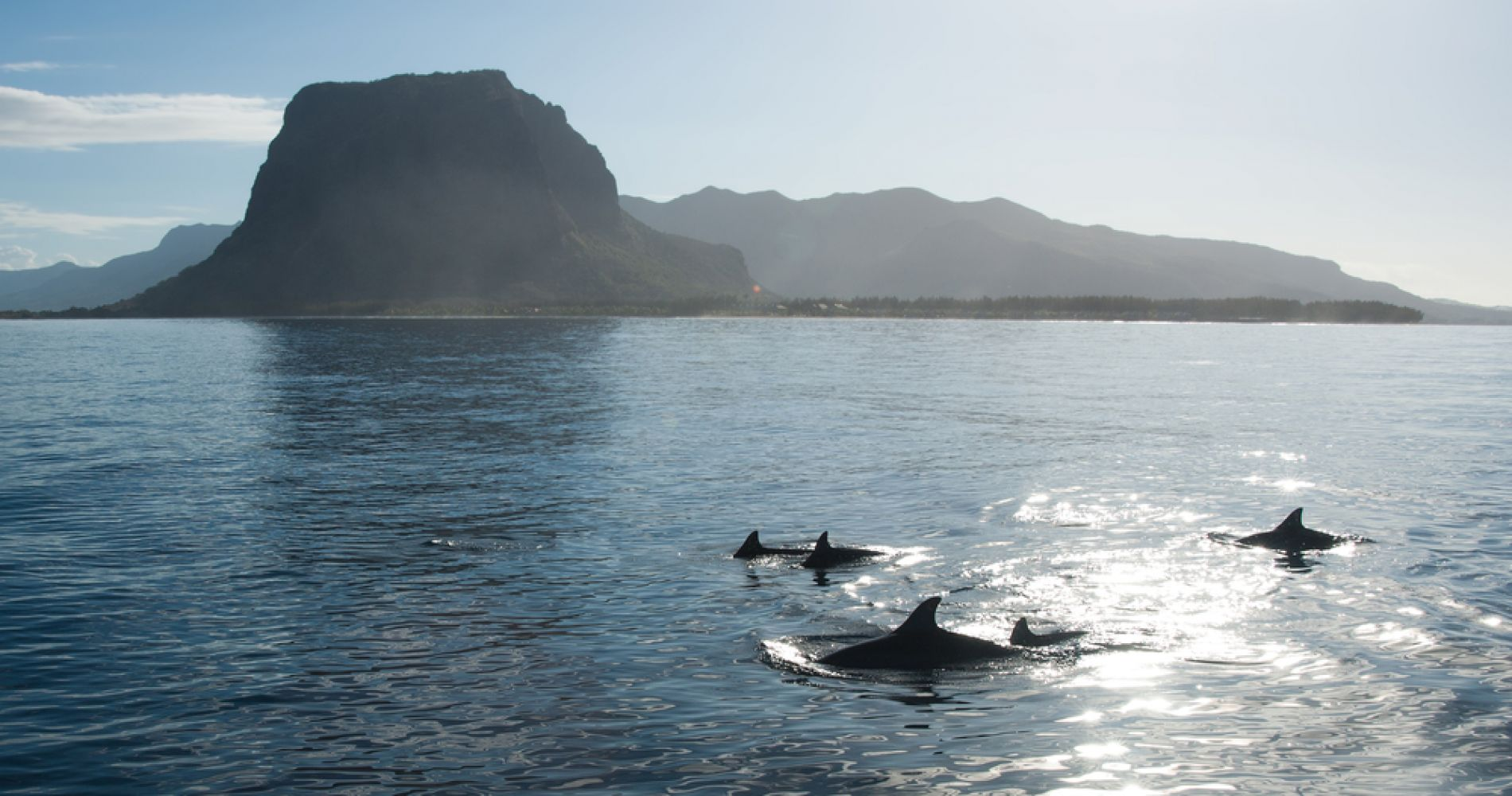 Swim with Wild Dolphins in Mauritius