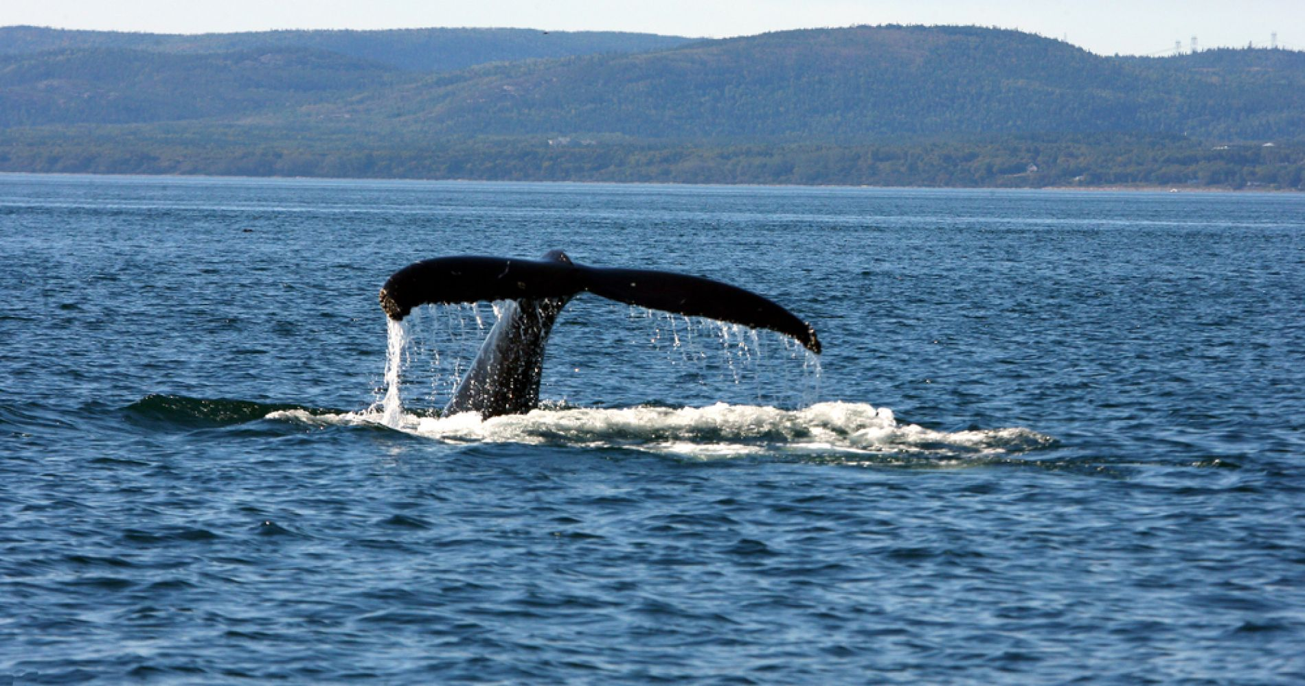 Whale Watching from Tadoussac Pier for Two