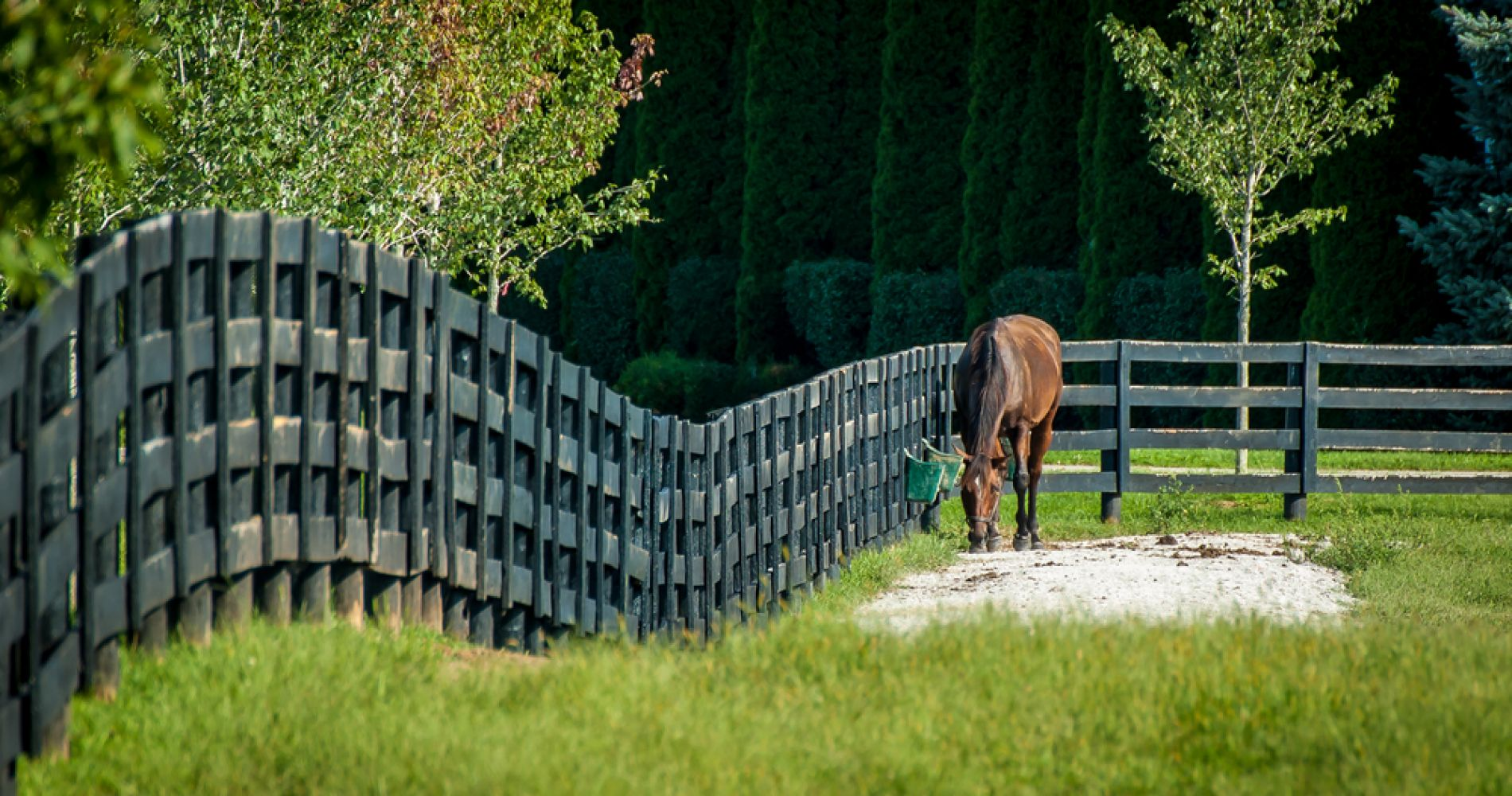 Horse Farm Tour of the Kentucky Bluegrass for Two