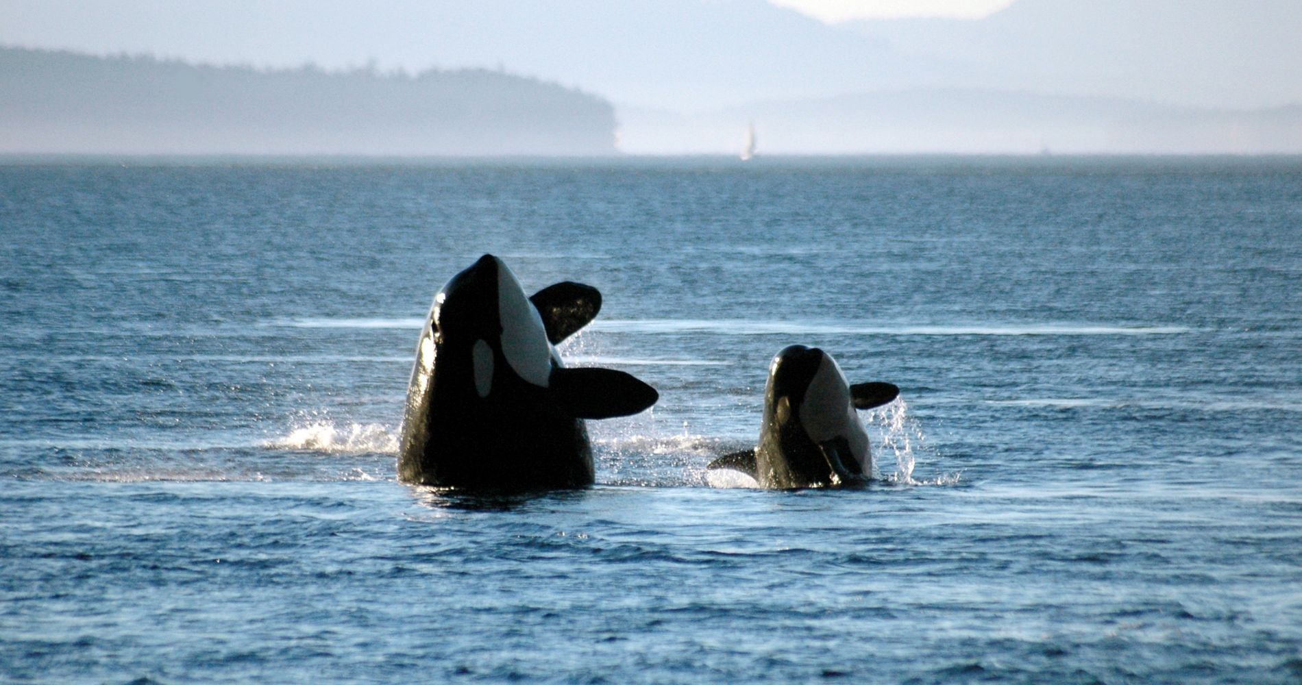 Zodiac Whale Watching Canada Experience Gifts