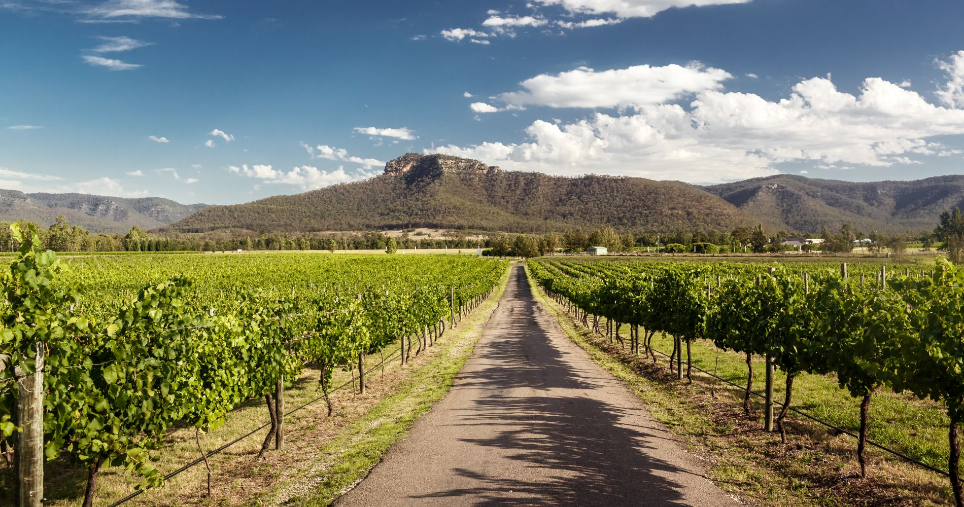 The Iconic Hunter Valley Wine Tasting