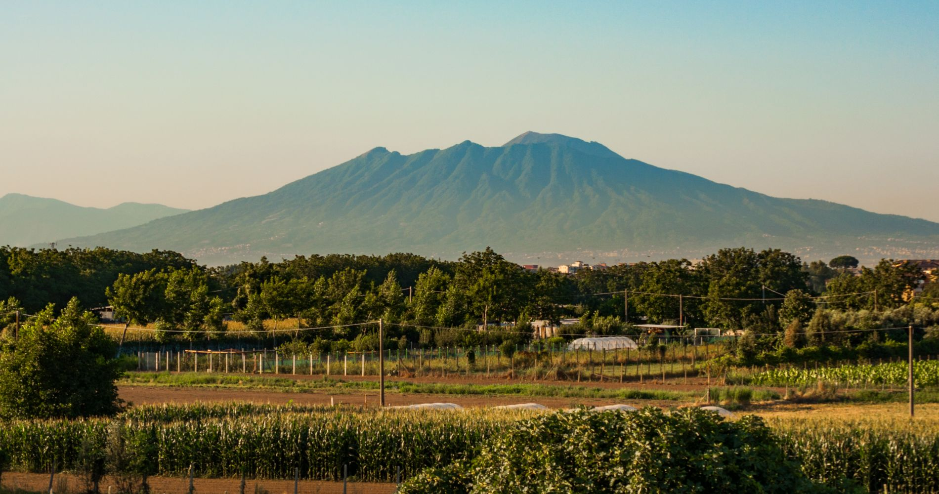 Vesuvius Winery Tour, Tasting & Lunch from Sorrento